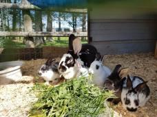 bunnies - Copy