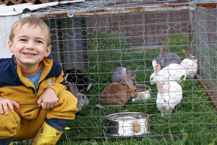 rabbittractor